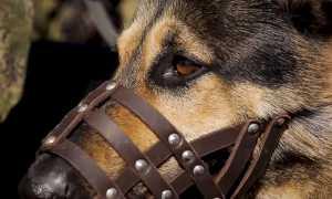 Друг человека и живое оружие: в Центре служебного собаководства ЗВО готовят «военных» собак » Военные люди